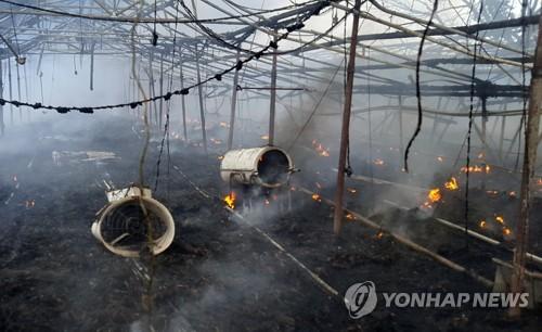 폭염 속 양계장서 불…닭 2만5천 마