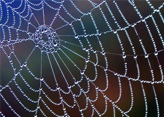 거미줄로 사람의 끊어진 신경 되살린다