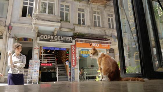 냥이가 행복한 나라… 다큐 '고양이