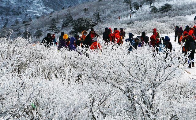새해 정기 듬뿍… 1월에는 태백산에
