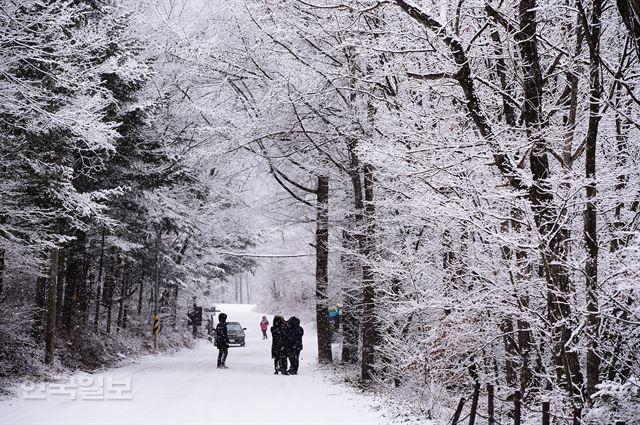 눈과 얼음…평창의 눈부신 잔치는 이미