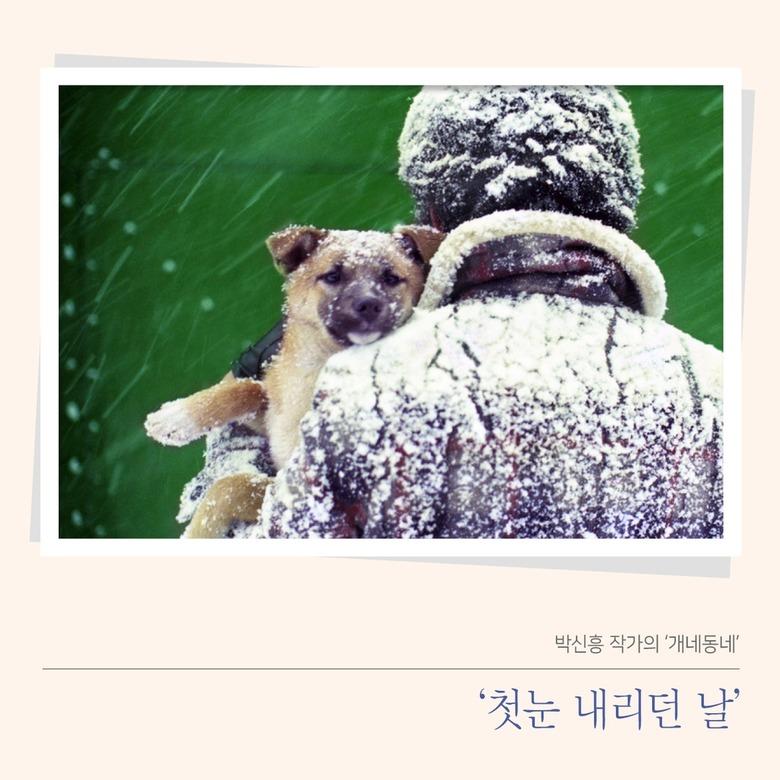 박신흥 작가의 '개네동네'