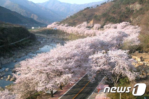 '봄꽃의 향연' 하동으로 봄나들이 떠