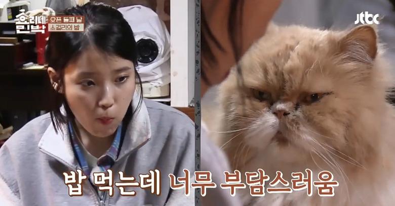 아이유 노려보던(?) 효리네민박 고양