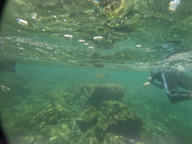 바다이구아나·땅거북... 생명의 진화