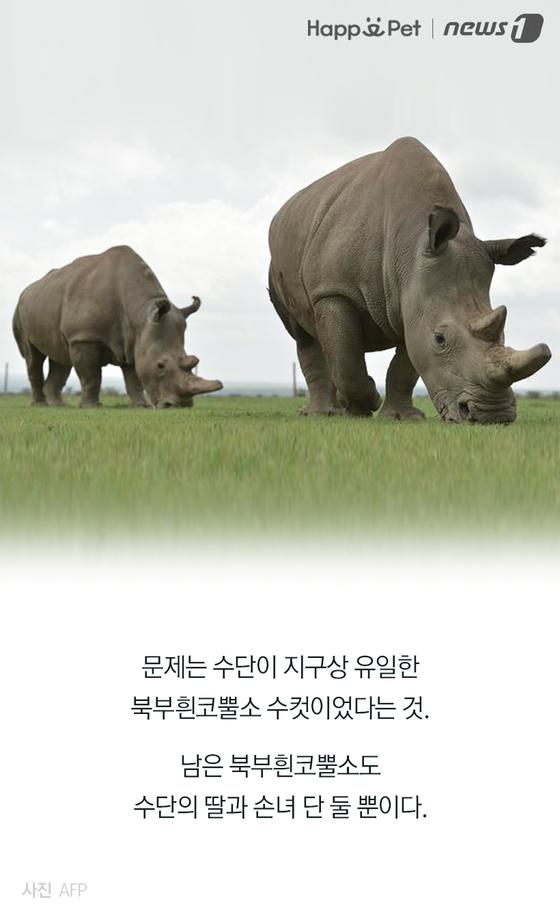 지구상 유일했던 수컷 북부흰코뿔소의