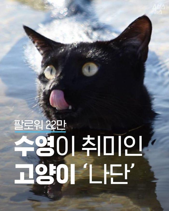 고양이가 물을 싫어한다고?…바다 수영