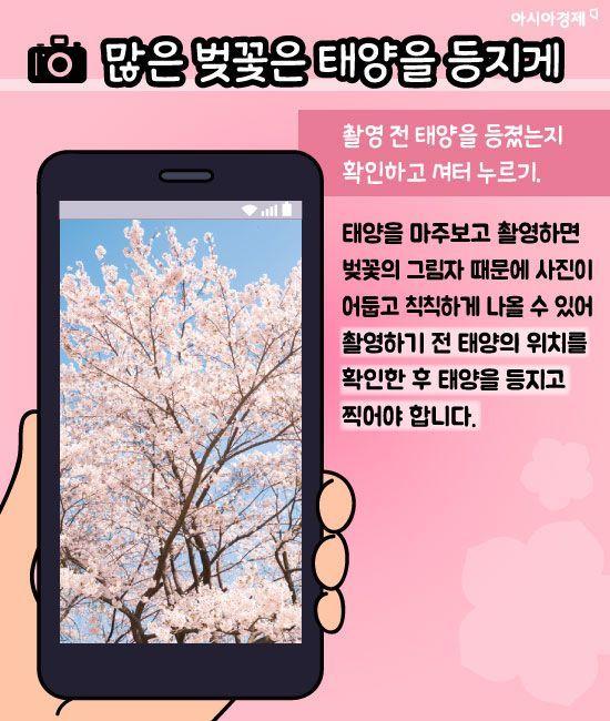 """""""내 벚꽃만 칙칙해ㅠㅠ""""... 벚꽃"""