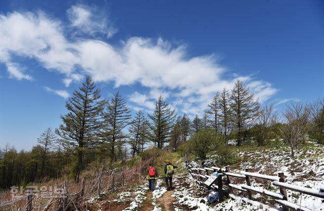 금대봉~대덕산 트레킹… 야생화 눈부신