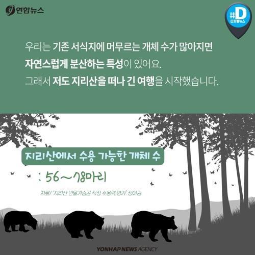지리산에서 세 번 도망친 반달가슴곰