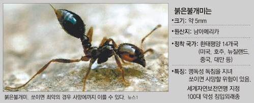 부산항서 붉은불개미 의심개체 발견…독