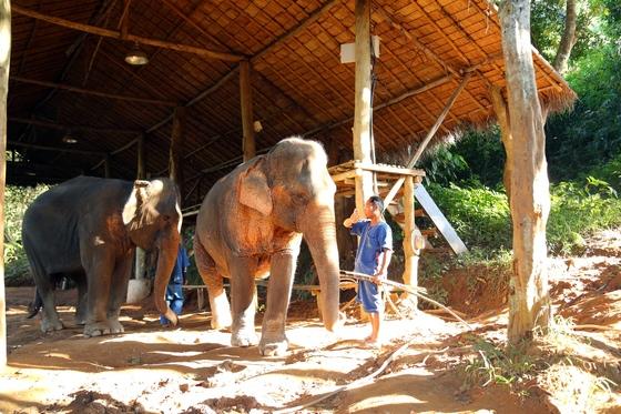코끼리는 타지 않기로 했다