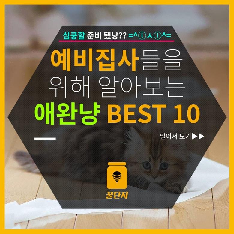 애완냥 BEST 10