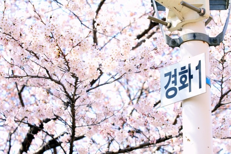 봄 봄 봄, 봄이 왔네요