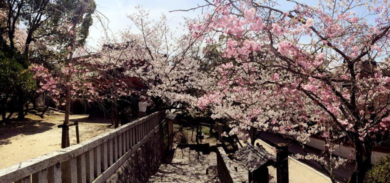 봄기운 물씬 나는 다자이후 산책길