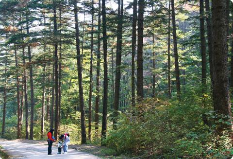 고요한 숲의 소리를 듣는 날 - 국립