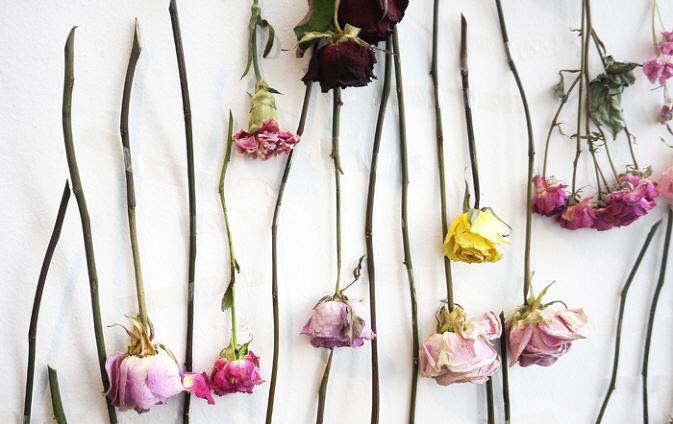 꽃을 오래 간직하는 방법? 드라이 플