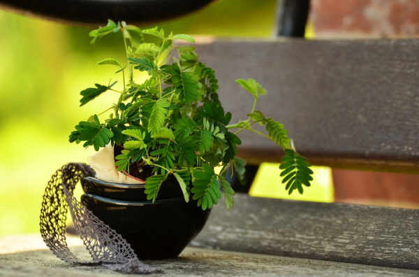 키우기 쉬운 식물로 사무실에서 건강