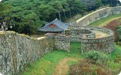 단풍나무 숲이 천연기념물로 지정된 사