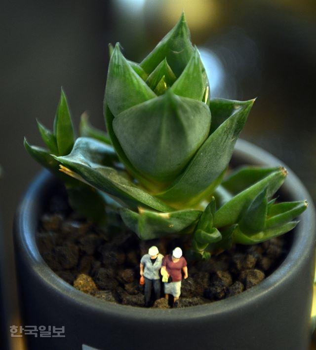 """반려식물이 속삭였다 """"내가 널 위로"""