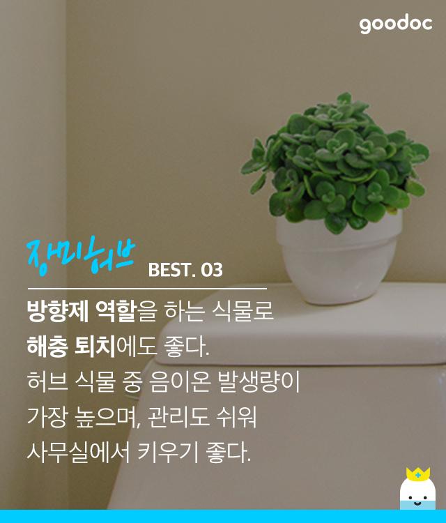 실내습도를 조절하는 식물 BEST 5