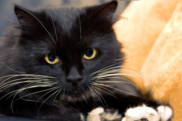 고양이에 대한 흔한 편견 10가지
