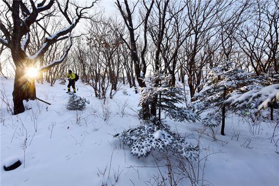 백두대간 雪國… 차디찬 흰 눈의 아늑