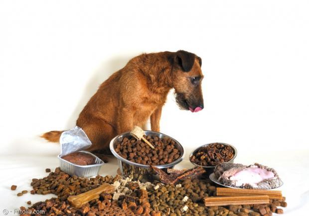 강아지가 숨도 안쉬고 사료를 먹는 이