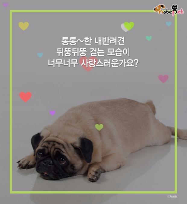 우리 강아지도 비만?