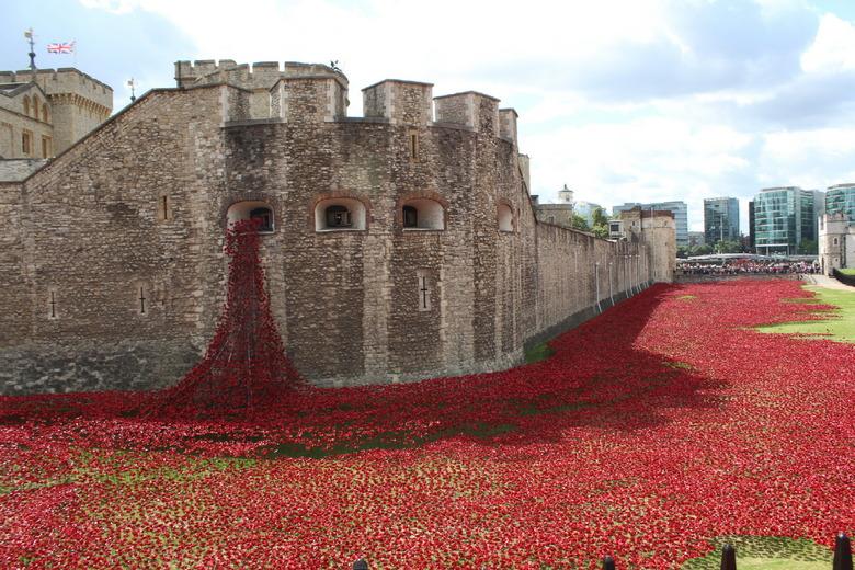 전쟁의 고통을 표현한 꽃