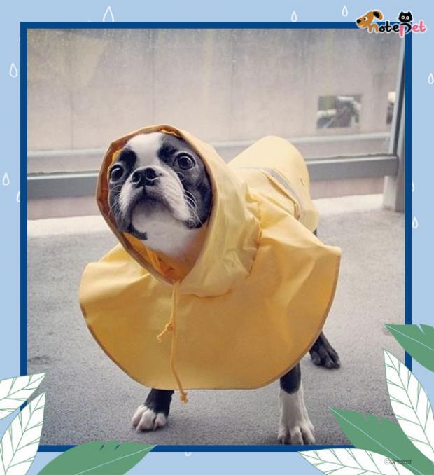 비가 와도 기분 최고!