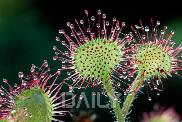 천연 해충 퇴치 식물 10종