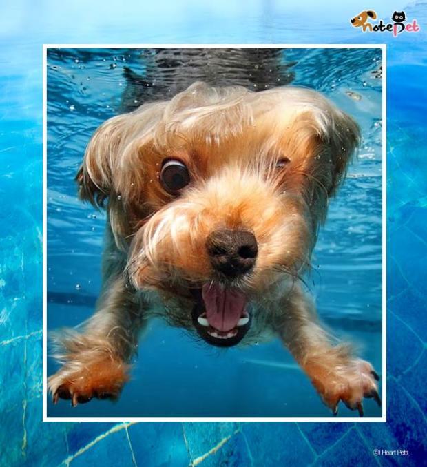 개수영 도전기