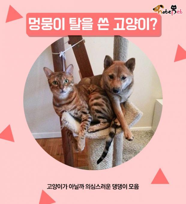 멍뭉이 탈을 쓴 고양이?