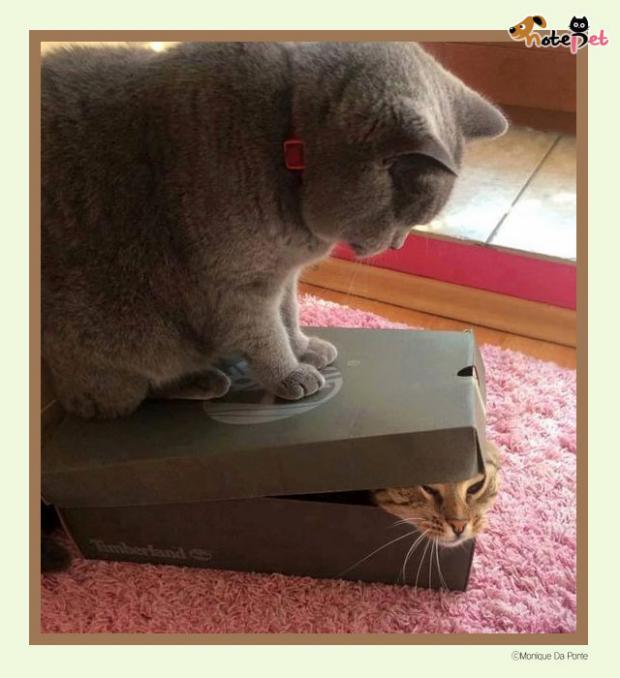 상자가 나타났다
