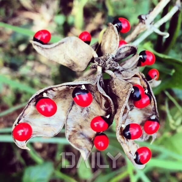 함부로 만지지 마세요! 독성 식물 1