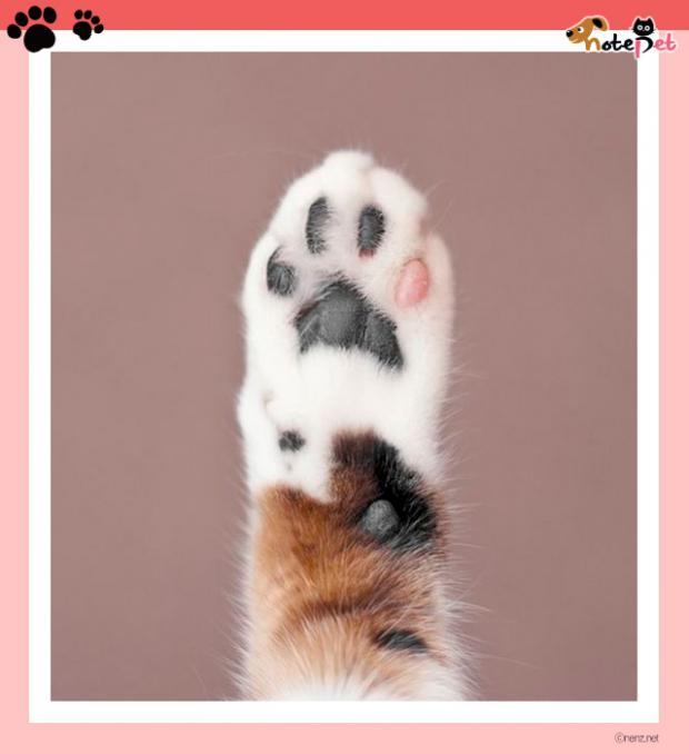 고양이는 '이것'도 귀여워