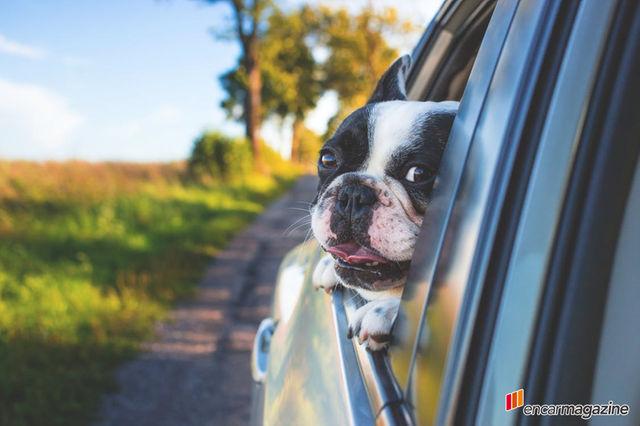 강아지를 안고 운전하면 도로교통법 위