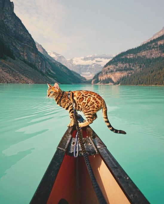 여행하고 탐험하는 고양이 '수키'