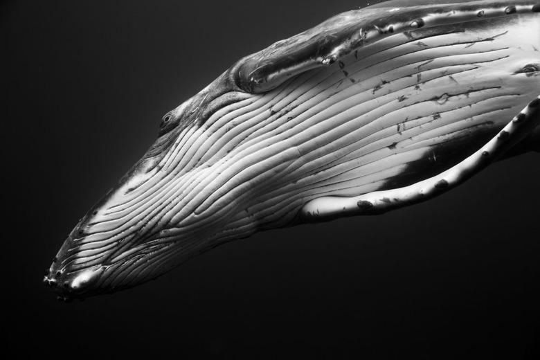 혹등고래와의 수중 촬영기 CRESSW