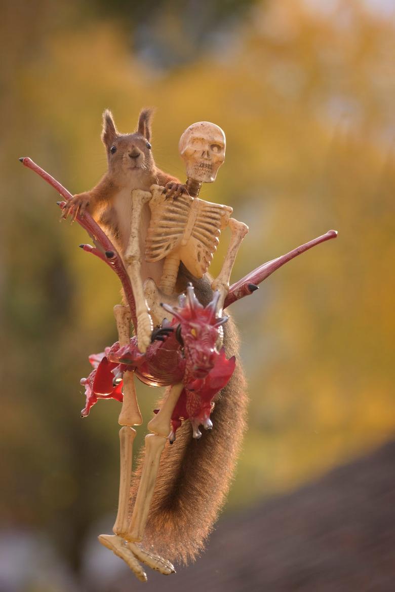 할로윈 테마를 담은 다람쥐 사진촬영기