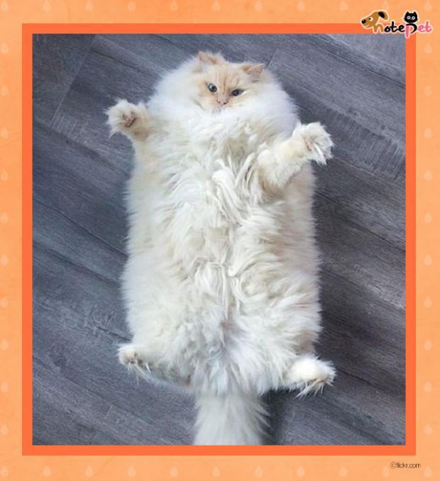 돼지 탈을 쓴 고양이