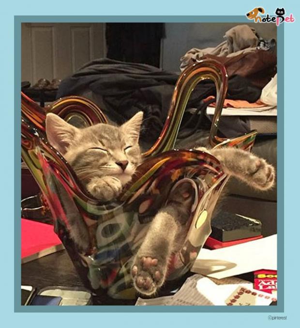 고양이의 확고한 취향