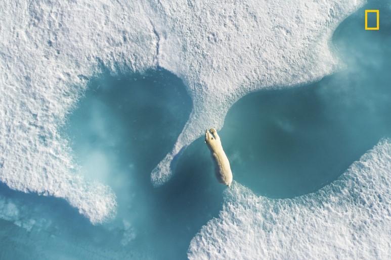 내셔널 지오그래픽: 올해의 자연사진