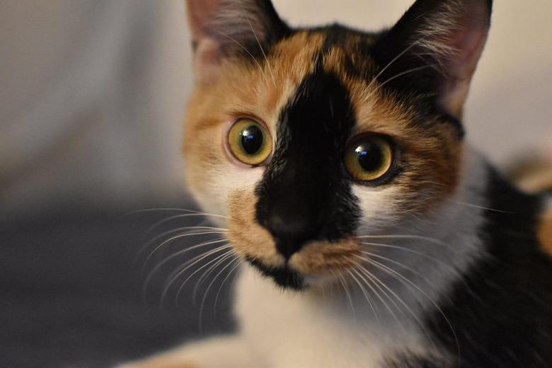당신이 고양이와 함께 살기로 결심했을