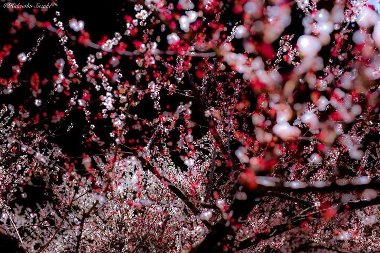 일본의 아름다운 봄,여름,가을,겨울