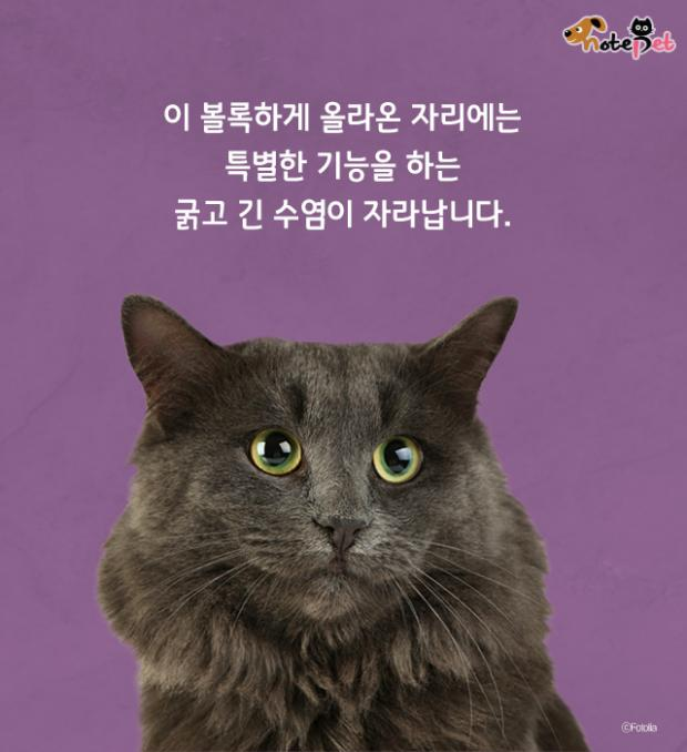 고양이 수염 역할이 뭔가요?