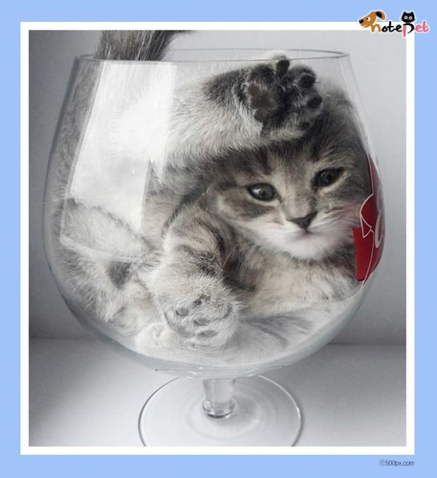 흐르고 늘어나고 녹아내리는 고양이들
