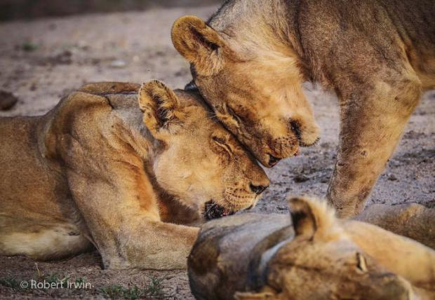 14세 소년이 찍은 야생동물 사진들