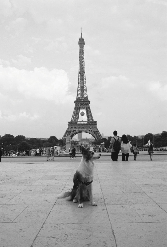 털북숭이 친구 페퍼와의 유럽 여행